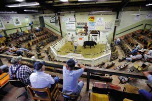 westminster-livestock-auction.jpg